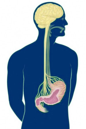 El estómago tiene su propio cerebro