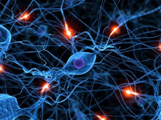 Transforman células del cordón umbilical en neuronas